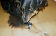img_perro reloj cambio hora_ listado