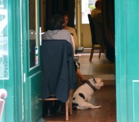 Img perro restaurante comer fuera art