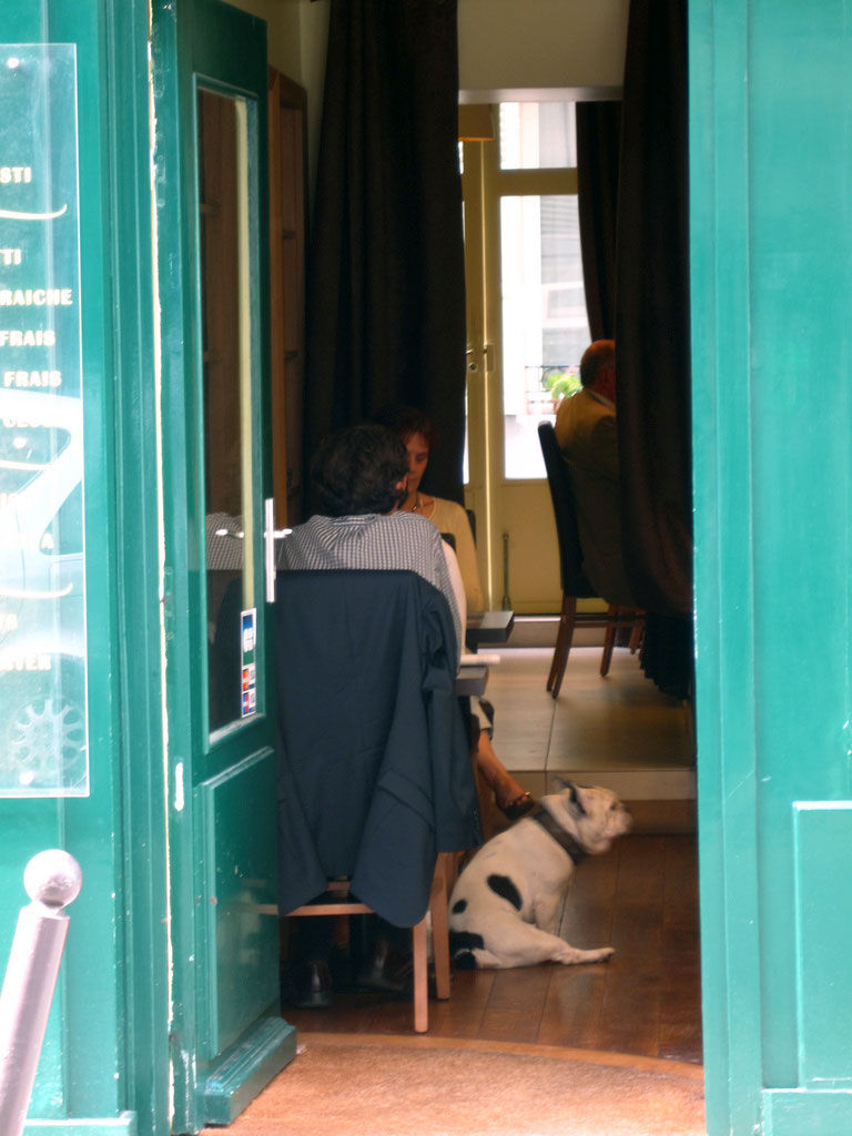 Img perro restaurante