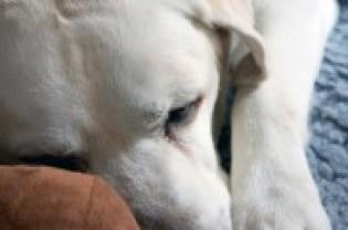 Img perro sacrificarnuestra a