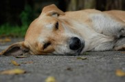 img_perro siesta muerte casa listado