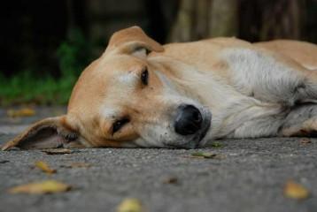 Img perro siesta muerte casa art