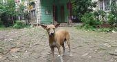 Img perro soloabandonado