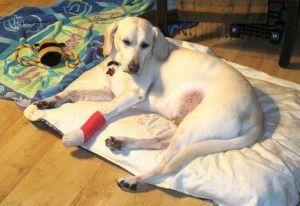 Img perro sufrido accidente que hacer art