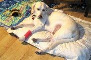 Img perro sufrido accidente que hacer listado