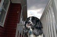 Img perro tormenta miedo listado
