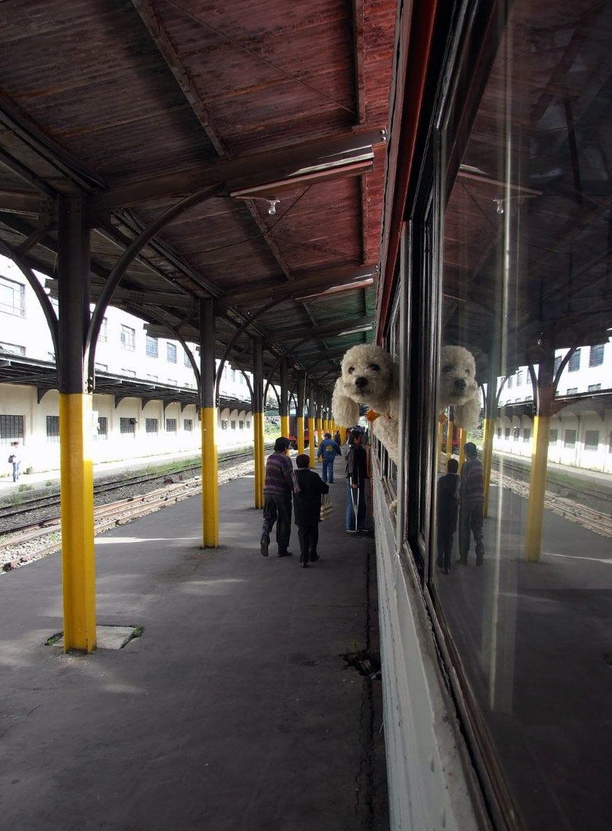 Img perro tren