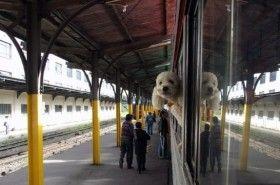 Img perro tren art