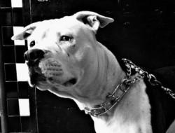Img perro triste 2