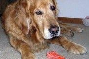 Img perro triste apetito comer listado