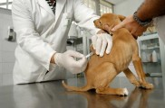 Img perro vacuna peque a2jpg