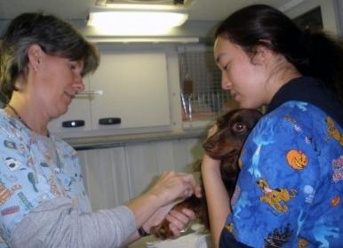 Img perro veterinario vacuna efectos secundarios art