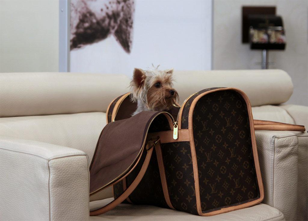 img_perro viaje 1