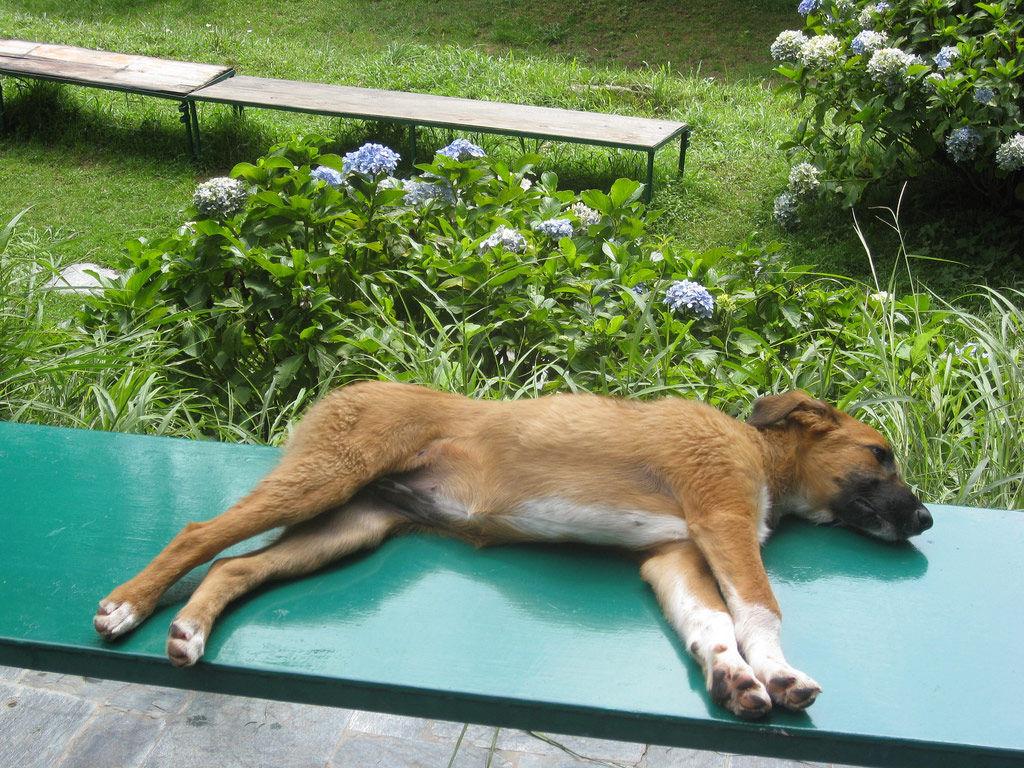 Img perro yoga