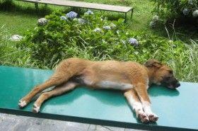 Img perro yoga art