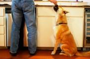 img_perro cocina listado