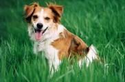 Img perro jadear lengua listado