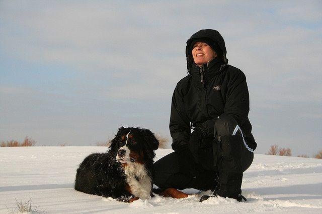 Img perro nieve montana
