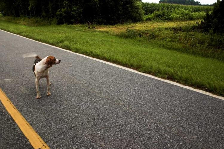 Img perros abandonados art
