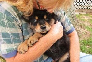 Img perros abrazos adopciones defensa animales formas ayudar cachorros maltrato art