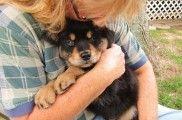 Img perros abrazos adopciones defensa animales formas ayudar cachorros maltrato listado