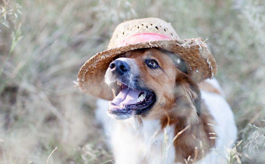 Img perros acampadas