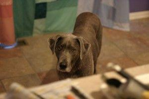 Img perros accidentes casas cocina consejos prevencion art