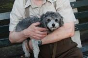 Img perros adoptar ancianos convivencia mascotas tercera edad jubilacion animales listado