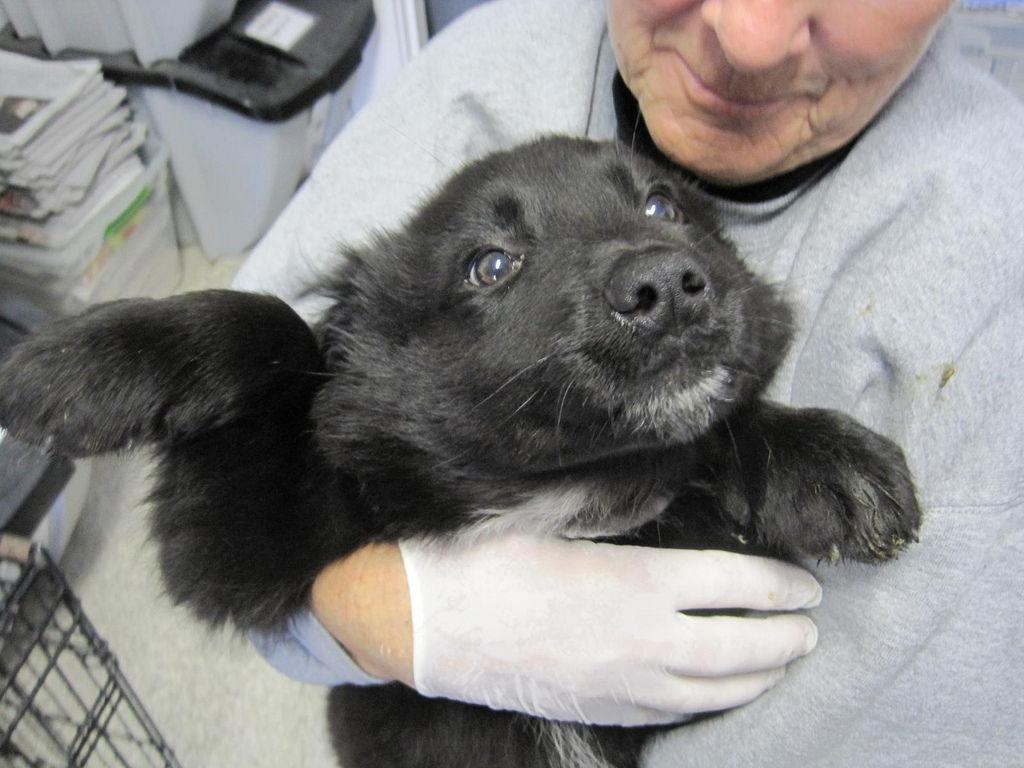 img_perros adoptar