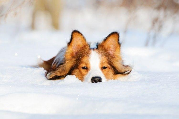 Img perros adoran nieve art