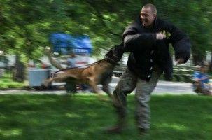 Img perros agresivos ataques personas consejos educar perros animales mascotas art