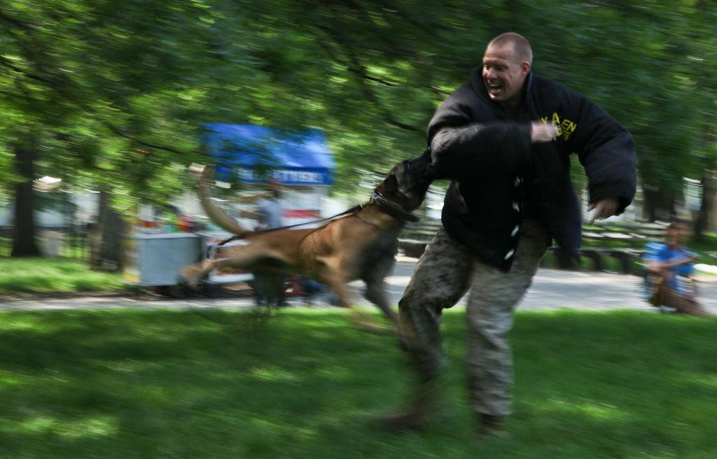 Img perros agresivos ataques personas consejos educar perros animales mascotas