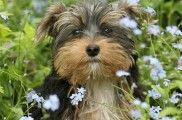 Img perros alergias polen primevera animales mascotas cesped plantas listado