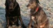 Img perros alimentacion distintos tamano grandes pequenos animales mascotas comida listado