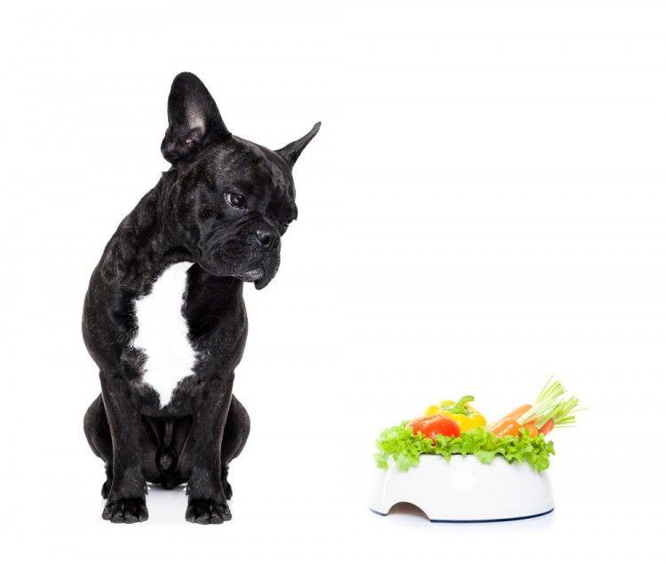 Img perros alimentacion natural verduras yogur2 articulo