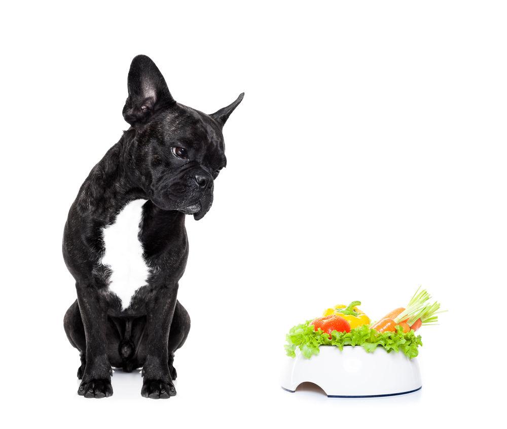 Img perros alimentacion natural verduras yogur