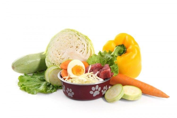 Img perros alimentacion natural verduras yogur4 art
