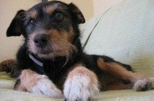 Img perros alimentos alimentar adoptar adoptados canes delgados no quiere comer mascotas animales art