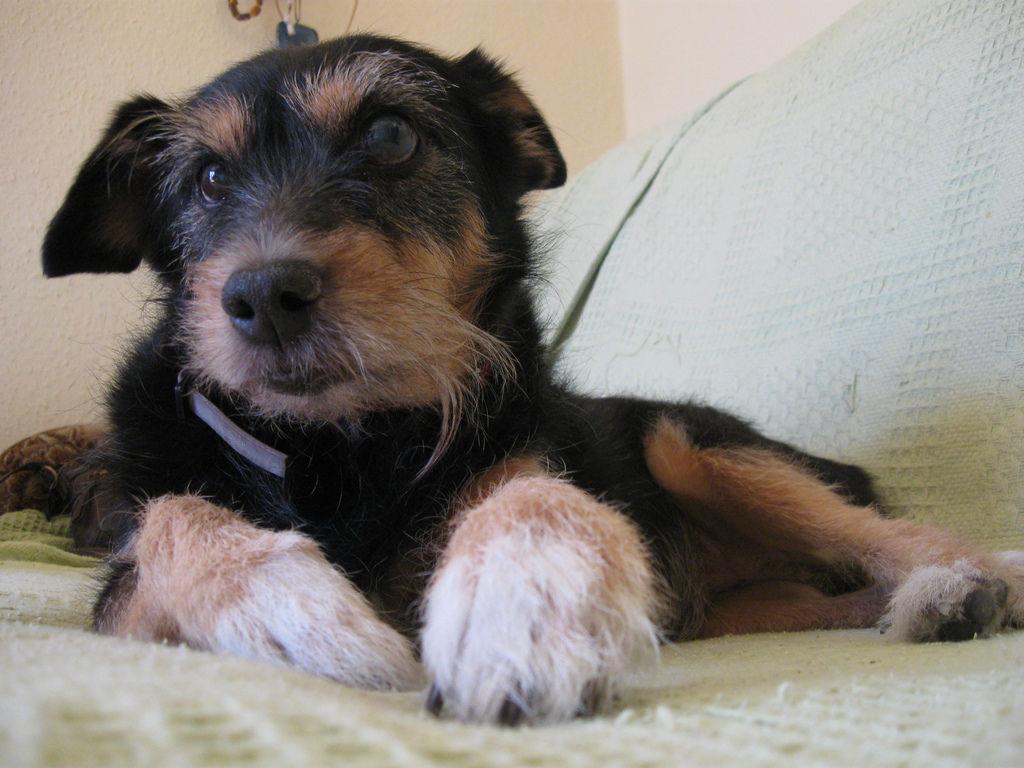 Img perros alimentos alimentar adoptar adoptados canes delgados no quiere comer mascotas animales