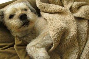 Img perros alimentos ancianos alimentacion canes mayores perros delgados enfermos mascotas animales art