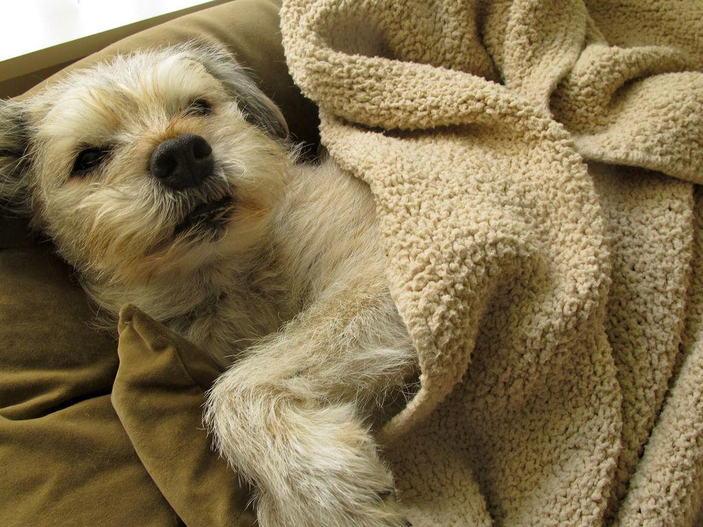 Img perros alimentos ancianos alimentacion canes mayores perros delgados enfermos mascotas animales