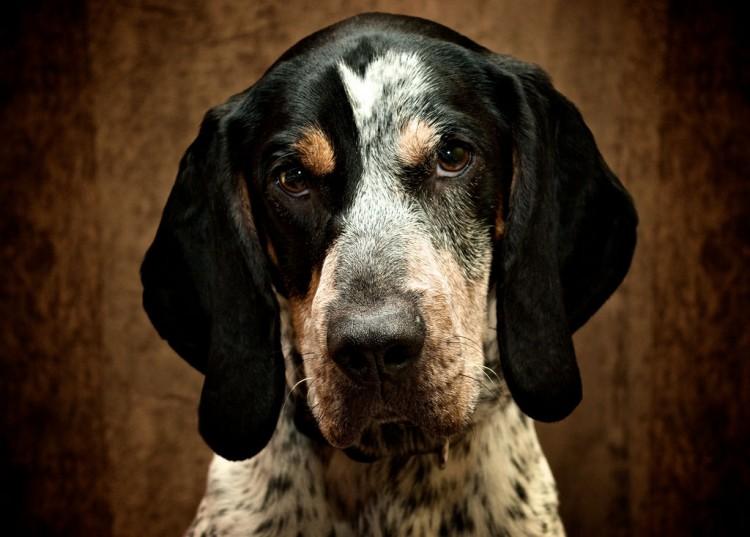 Img perros alimentos inteligentes marores