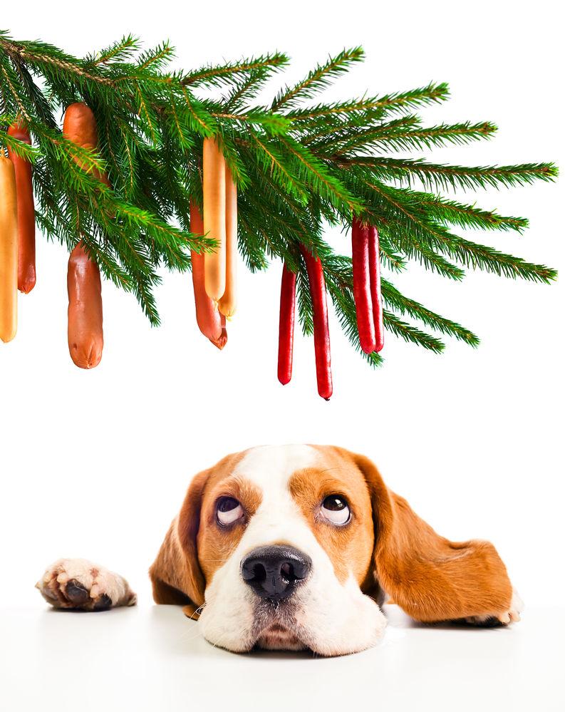img_perros alimentos peligrosos navidad toxicos2
