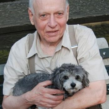 Img perros ancianos beneficioss art