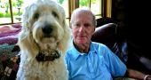 Img perros ancianos salud