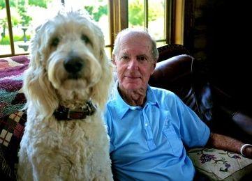 Img perros ancianos salud art