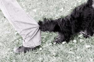 Img perros ansiedad estres solos en casa ladridos problemas animales mascotas consejos art