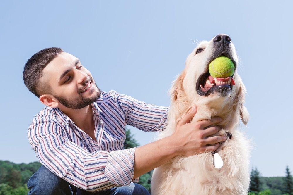 img_perros aprender dar juguete