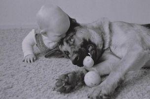 Img perros bebes mascotas hablar ladrar entender animales beneficios art