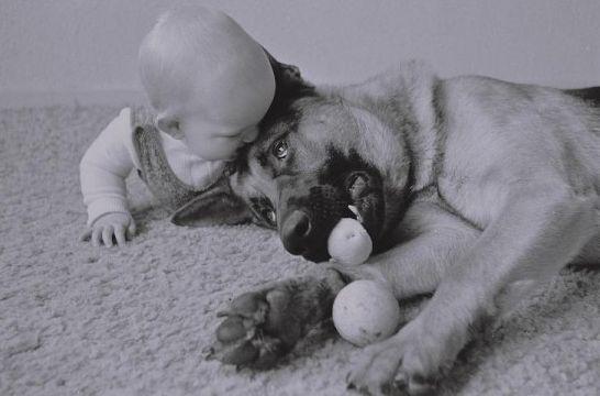 Img perros bebes mascotas hablar ladrar entender animales beneficios listg